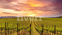 Private Wine Tour to Napa & Sonoma from San Francisco with Certified Wine Guide