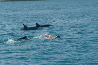 Dolphin Swim and Bénitiers Island Day Trip with Lunch