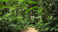Cairns Sightseeing Tour Including Botanical Gardens, Mt Whitfield and the Dome image 1
