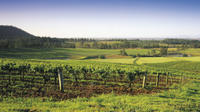 Hunter Valley Food and Wine Tasting Day Tour from Sydney Including Optional Hunter Valley Gardens image 1