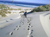 Otago Peninsula  Guided Coastal Walk Including the Chasm and Lover's Leap, Dunedin Natural Activities & Attractions
