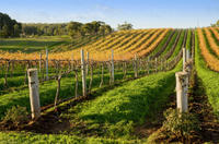 Victor Harbor with McLaren Vale Wine Region Tour from Adelaide, Adelaide City Tours and Sightseeing