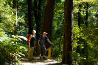 Self-Guided Queen Charlotte Track Walk from Picton, Picton Natural Activities & Attractions