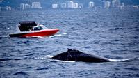 Fast Fun and Exciting Whale Watching from Mooloolaba