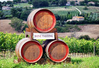 Chianti Classico and SuperTuscan Private Wine Tour from Pisa