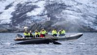 RIB Whale Watching Cruise from Tromso