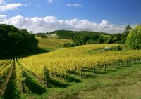 McLaren Vale and Glenelg Tour with Wine Tastings from Adelaide, Adelaide City Tours and Sightseeing