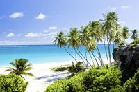 Barbados Private Custom Island Tour image 1