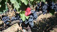 Private Irpinia Wine Tour with Pizza Cooking Class from Sorrento with Somme