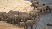 Luxury Mobile Tented Camping In Chobe National Park River Front