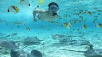 Bora Bora Snorkel Cruise with Shark and Stingray Feeding