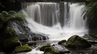 Mt Field National Park Including Russell Falls: Private Sightseeing and Photography tour from Hobart image 1