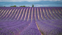 Small-Group Lavender Tour of Luberon Villages, Lourmarin, Roussillon and Sault from Aix-en-Provence