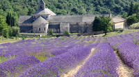Small-Group Lavender Tour to Gordes, Abbey of Senanque and Roussillon or Sault from Avignon