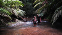 5 jours Jungle sauvage Ranger Adventure Tour de Bangkok - Khao Sok -