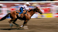 Calgary Stampede Including Overnight Accommodation