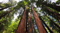 Muir Woods and Sausalito Morning Tour