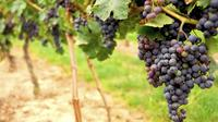Wine Experience Day Trip to Napa and Sonoma by Luxury Motorcoach