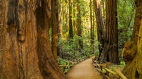 Muir Woods and Sausalito Experience