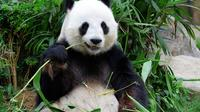 Essence Chongqing and Giant Panda Day Tour