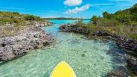 Guided Stand Up Paddleboard Tour Through Mangrove Estuaries