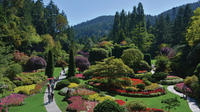 Brentwood Bay Kayaking and Butchart Gardens Tour