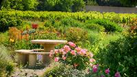Winery Tour and Wine Tasting in Carcassonne