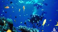Day tour to Best Snorkeling in Taba Egypt