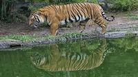 Private Day Trip to Sundarban from Khulna image 1