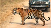 5-Hour Tiger Safari to Panna National Park from Khajuraho