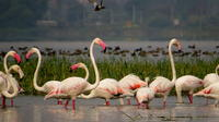 Full-Day Bird Safari Excursion to Bhigwan from Pune