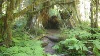 Private Olympic National Park Rainforest Tour from Seattle