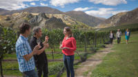 Original Wine Tour, Queenstown Wineries & Vineyards