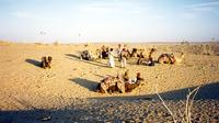 4-Night Golden Sands of Rajasthan Tour including Jaisalmer and the Sam Dunes