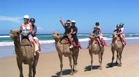 Agadir 2-Hour Camel Ride