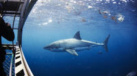 Great White Shark Cruise with Optional Cage Dive and Aqua Sub from Port Lincoln image 1
