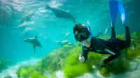 Half-Day Sea Lion Snorkeling Tour from Port Lincoln, Port Lincoln Water Activities