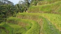 Full-Day Bali Island Tour Including Mt Batur  the Sacred Monkey Forest and a 2-Hour Spa Treatment 8:00am Departure