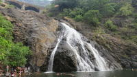 Full-Day Private Tour: Dudhsagar Water Falls and Spice Plantations from Goa