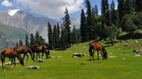 Private Tour: Thajiwas Glacier, Meadow of Gold, and More from Srinagar