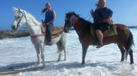 Aruba Small Group Horseback Riding Beach Tour