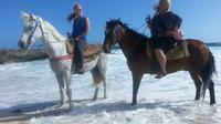 Small-Group Horseback Ride and Island Tour in Aruba