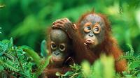 Private Tour: Gunung Leuser National Park Trekking Tour with Orangutan Viewing from Medan