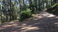 Half-Day Mount Dandenong Trail Running Tour Including Breakfast image 1