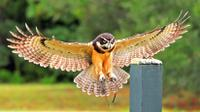 Birds of Prey Guided Tour and Flight Demonstration at the Avian Conservation Center