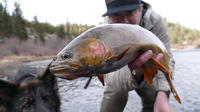 Full-Day Small-Group Fly Fishing Tour