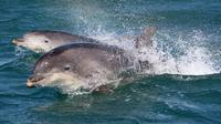 Dingle and Fungie Dolphin Boat Tour from Killarney  image 1