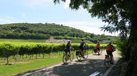 Organic wine tour by bike