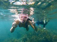 Manly Snorkeling Tour and Nature Walk, Sydney City Water Activities