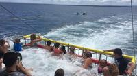 Jervis Bay Boom Netting and view the Bottlenose Dolphins